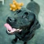 Canine Good Citizen Test