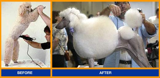 Brazilian Wax for Dogs