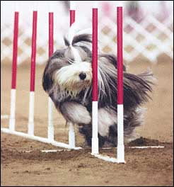 Dog Agility Experts