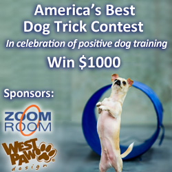 Best Dog Trick