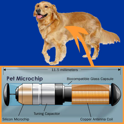 Microchips for Dogs