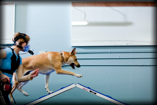 Dog Agility Research