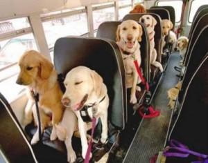 dog-school-bus