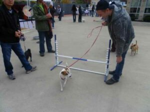 Dog Jumping at Event!