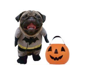 Halloween Dog!
