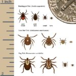 Picture of ticks