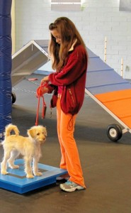 Dog Agility Summer Camp for Kids