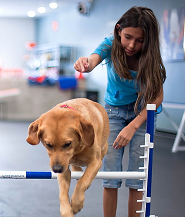 Summer Dog Training Camp