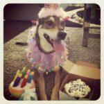 sadie birthday
