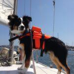 jagger sail