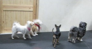 Small Dog Meet Up
