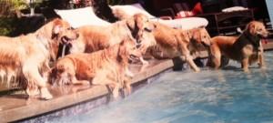 Pups in Pool