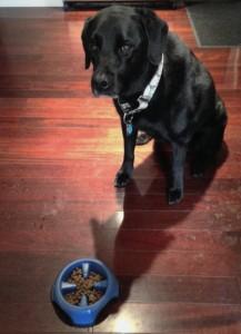 dottie food bowl