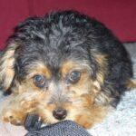 Millie7puppy