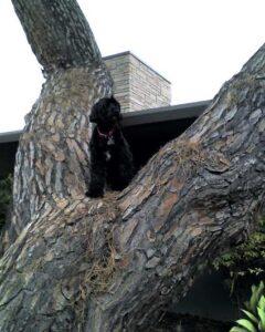 Echopie_Treedog_2