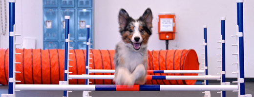 Culver City Dog Agility