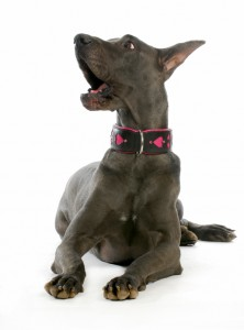 how to train a dog to stop barking so much
