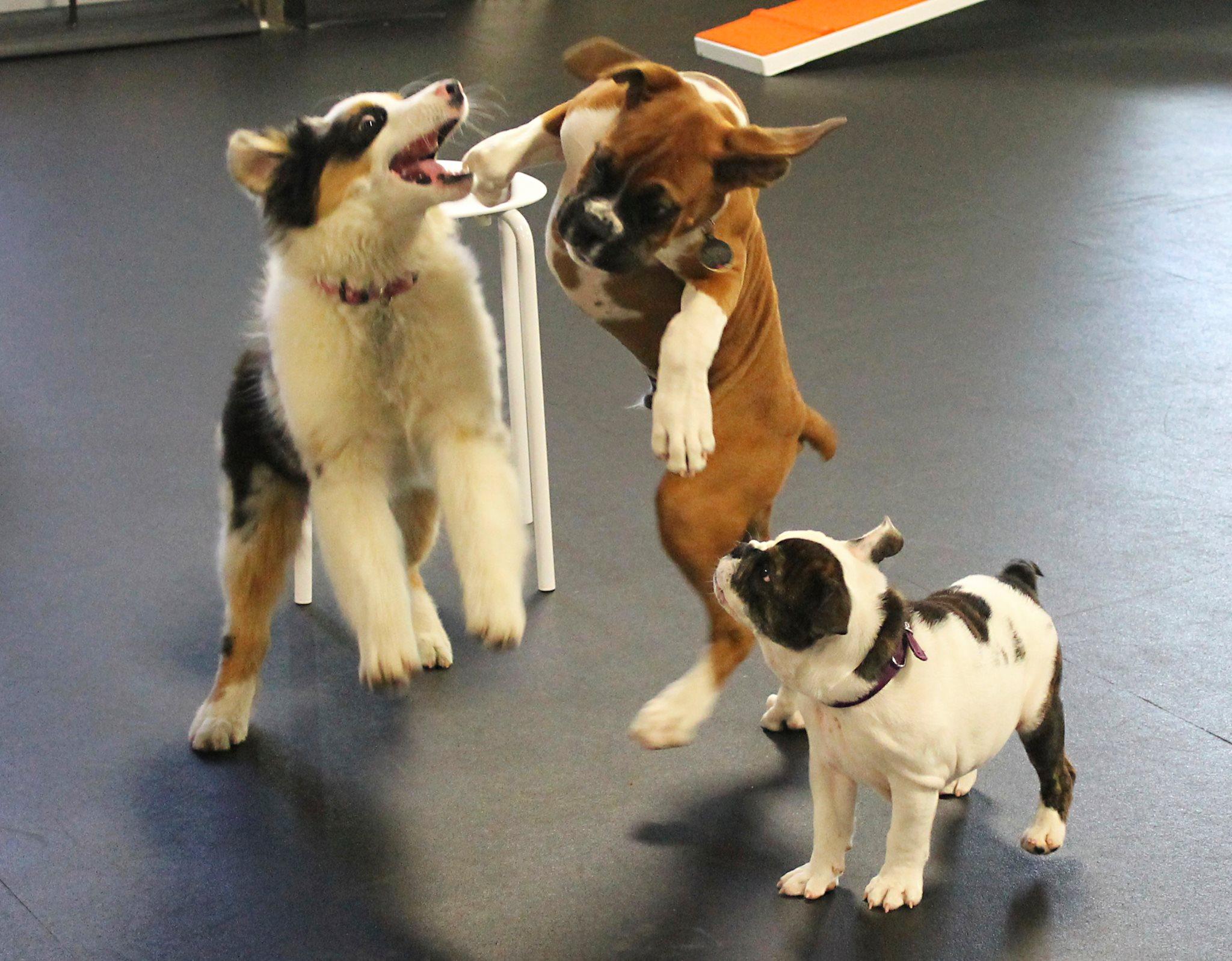 dog playgroups