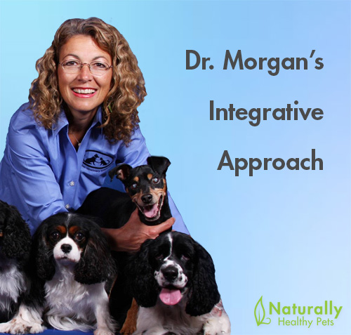 Healthy Dog Seminar with Dr. Judy Morgan