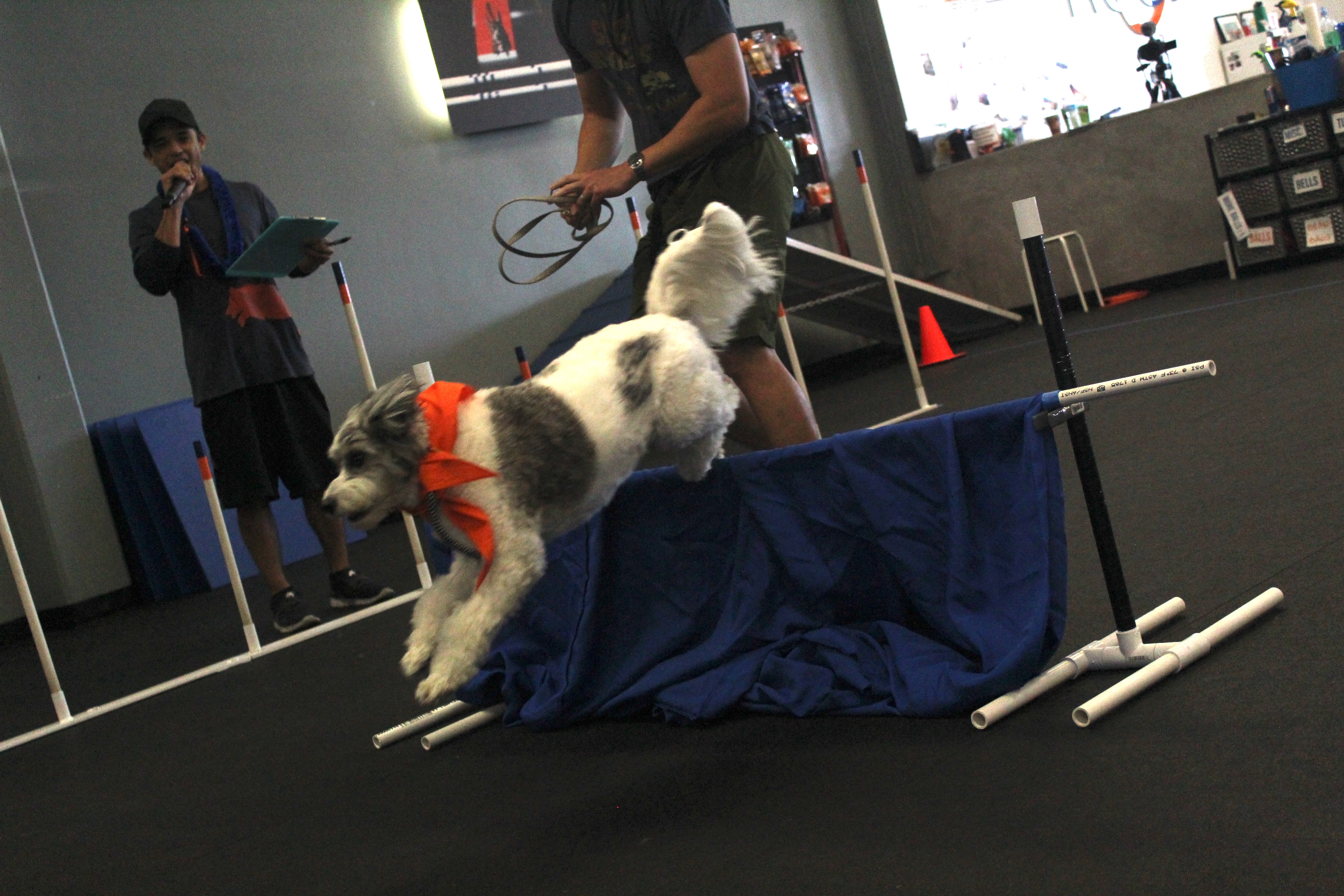 Shy Puppy Turned Agility Star Zoom Room Dog Training