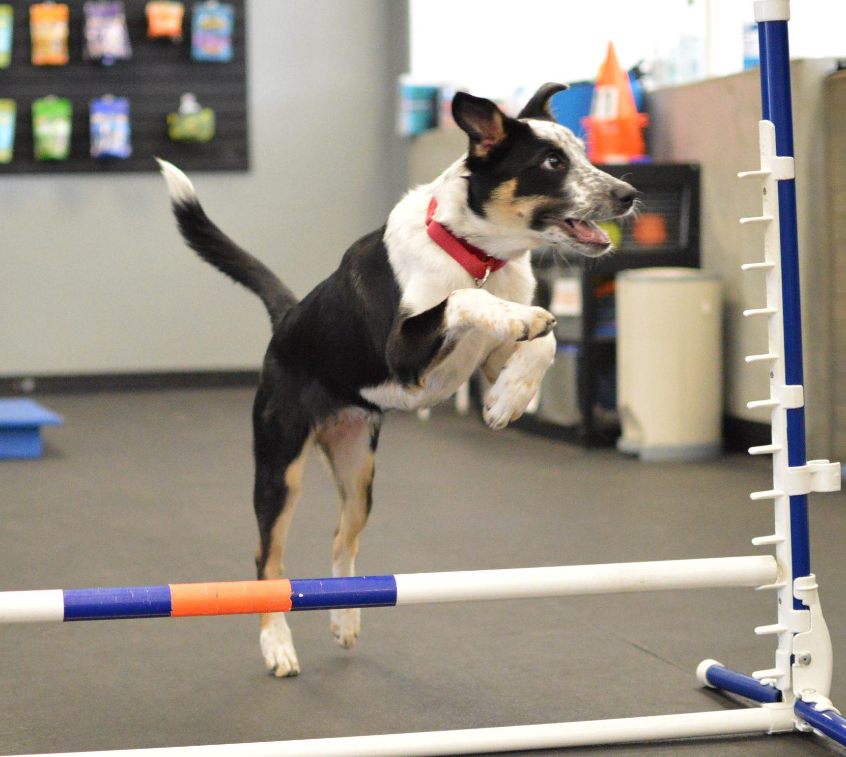 Quot Ball Is Life Quot Redondo Beach Zoom Room Dog Training