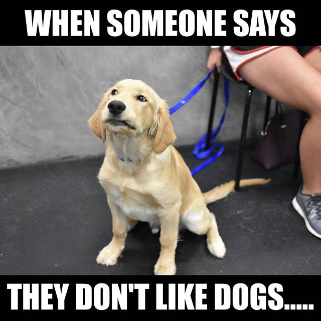 Who would say that anyway? #lovedogs #noway