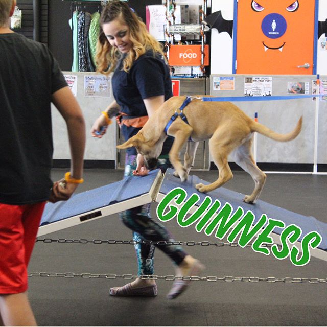Check out our Puppy Obedience class this morning during our exposure training exercise!! Way to go Guinness, Sir Viggo & Baxter!! We can't w