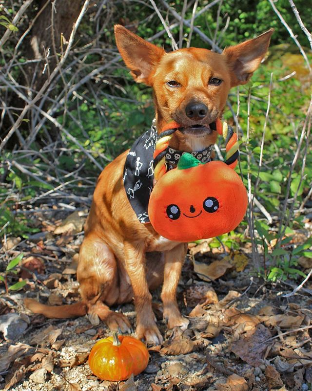 Shop dog Ringo is here to remind everyone of our Halloween Party the 'Doom Room'!👻 This Saturday October 28th starting at 3:30PM.  If you