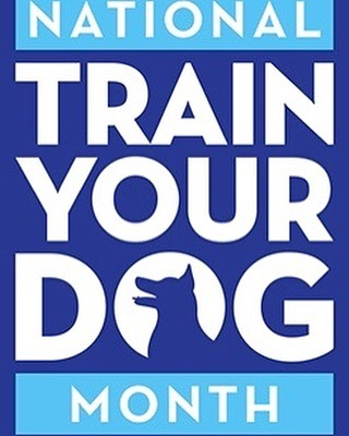 #new year #newyou #newtraining Train your dog with us at #zoomroomcc