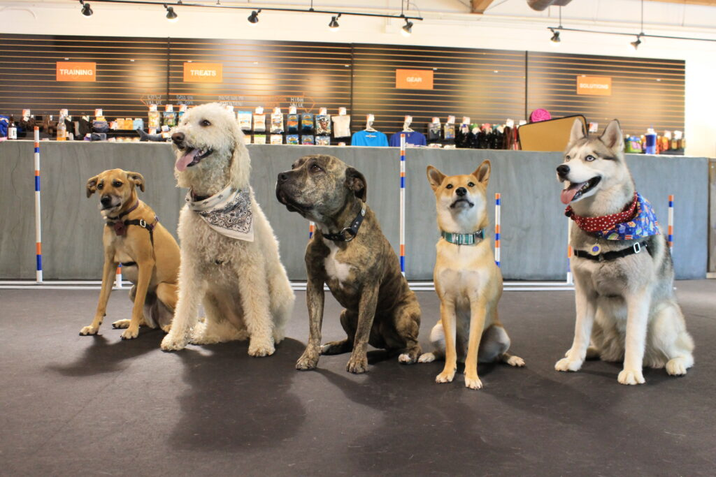 Los Angeles Dog Training Dog Trainers In L A Zoom