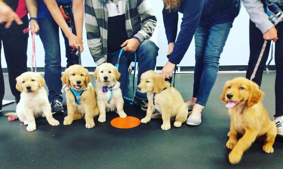Puppy Training Near Me | Zoom Room | Zoom Room Dog Training
