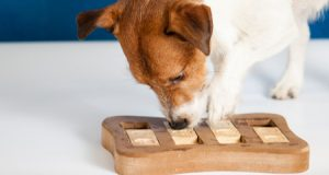 5 Ways to Play With Your Dog