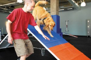 Zoom Room is an Indoor Gym for Dogs