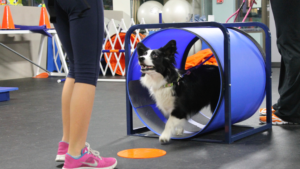 Trainer Hacks That Make Training Your Dog So Much Easier