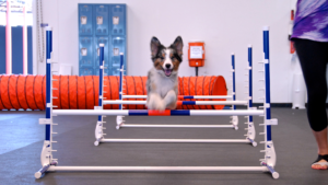 Los Angeles Pet Care Services in a Booming Pet Care Industry
