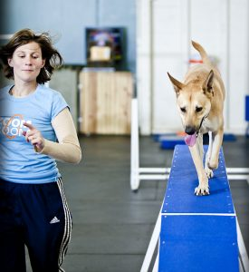 Would You Take Your Dog to the Gym?