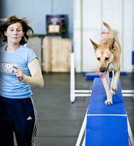 Surprising Ways Your Dog Can Improve Your Workout