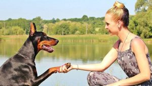 New Trends in Dog Training