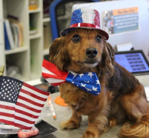 Zoom Room Head Trainer Shares Dog Safety Tips for the 4th of July