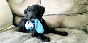 How to Keep Your Puppy Safe During Playtime