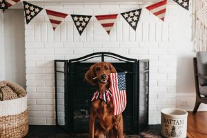 July 4th Dog Safety Tips