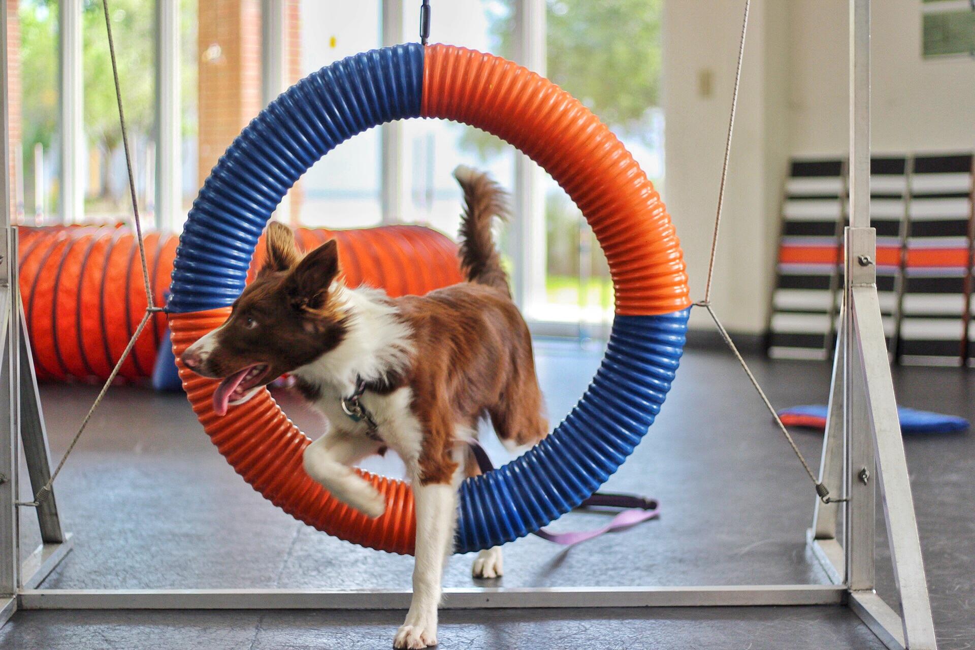 Dog Agility Training Austin