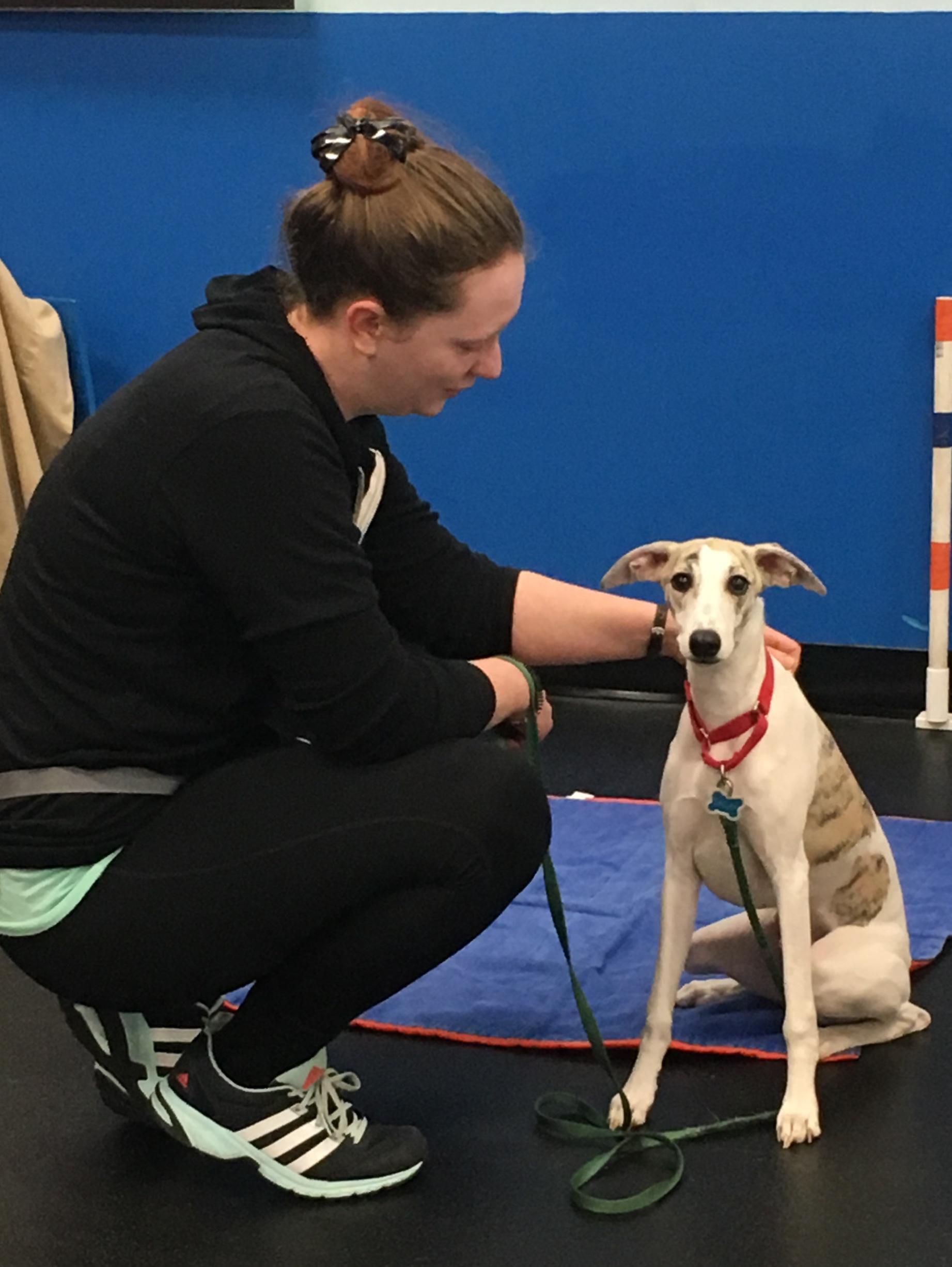 Dog Obedience Training Virginia