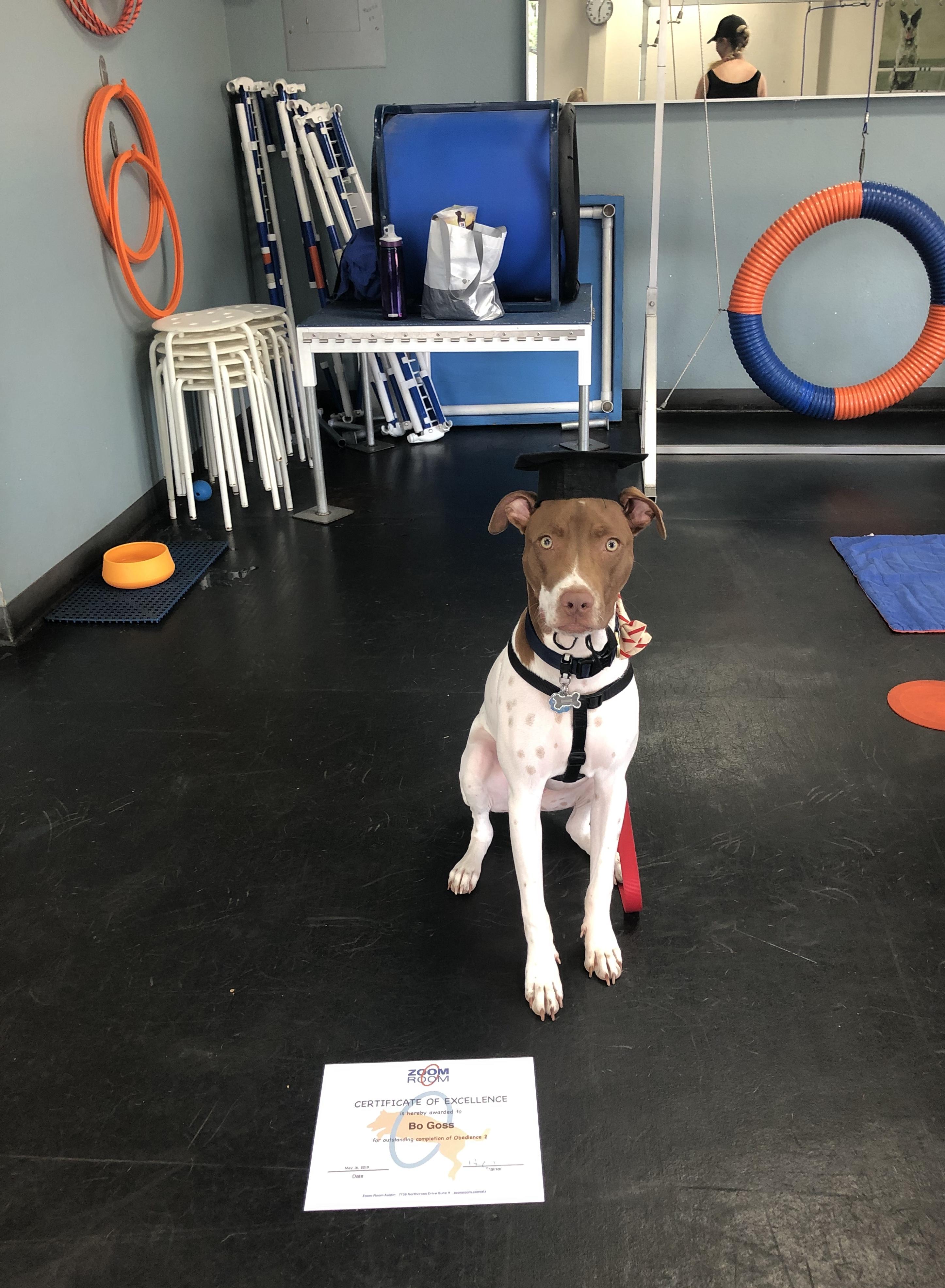 Dog training austin agility obedience puppy zoom room dog