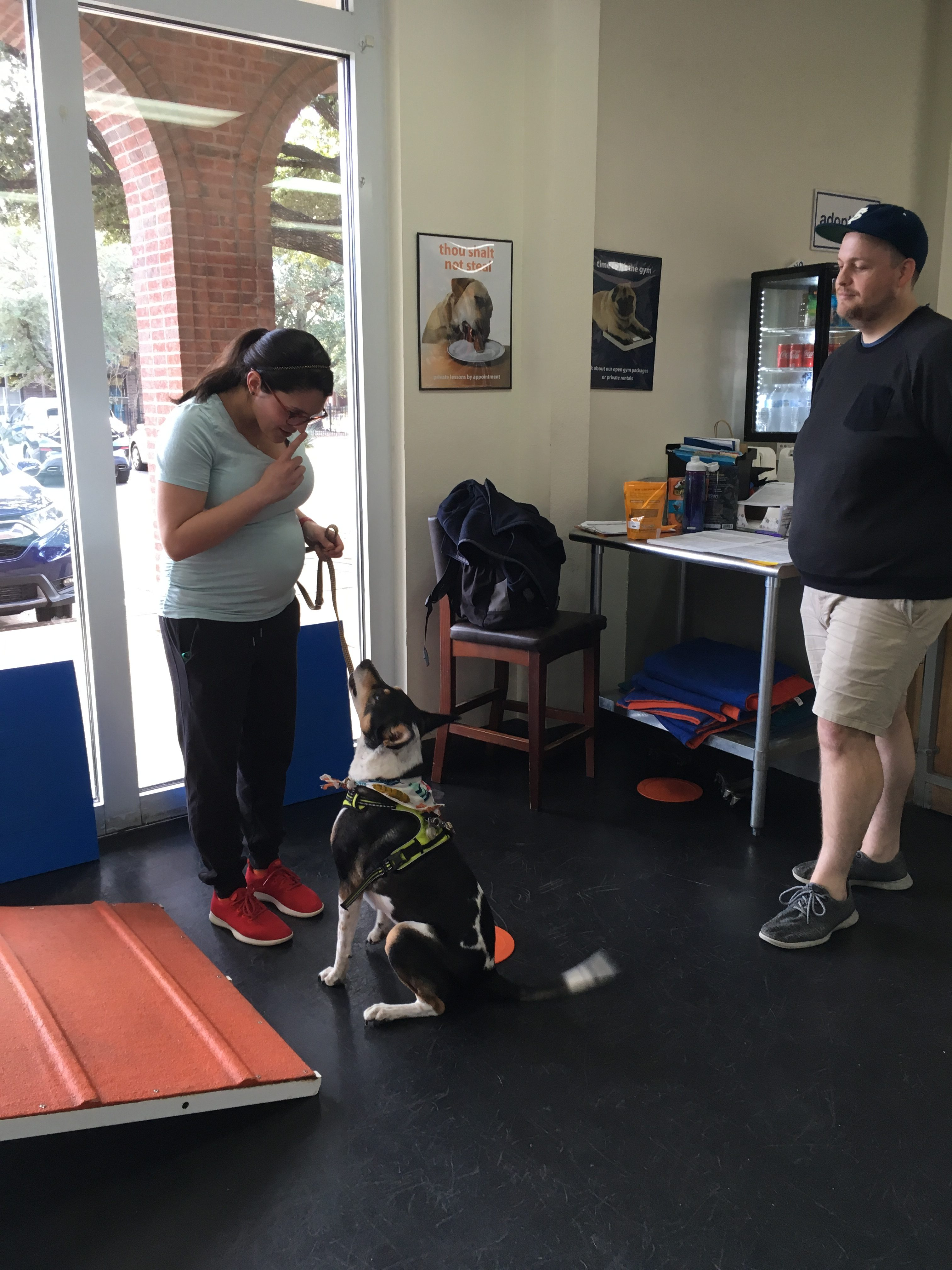 Scout jan austin zoom room dog training