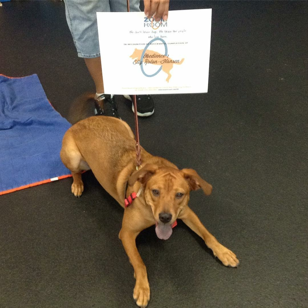 Virginia Beach Therapy Dog Training