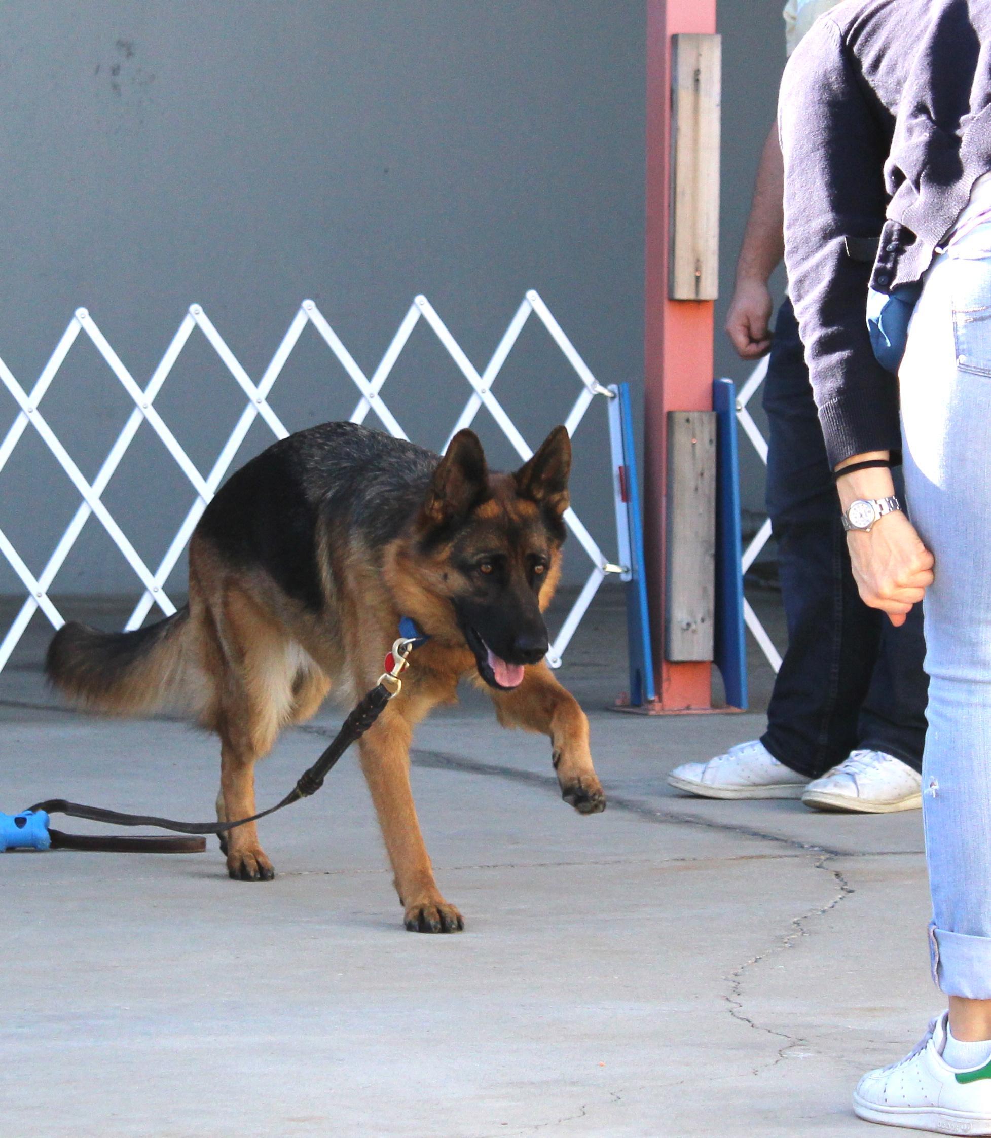 Abby Feb 22 Redondo Beach Zoom Room Dog Training