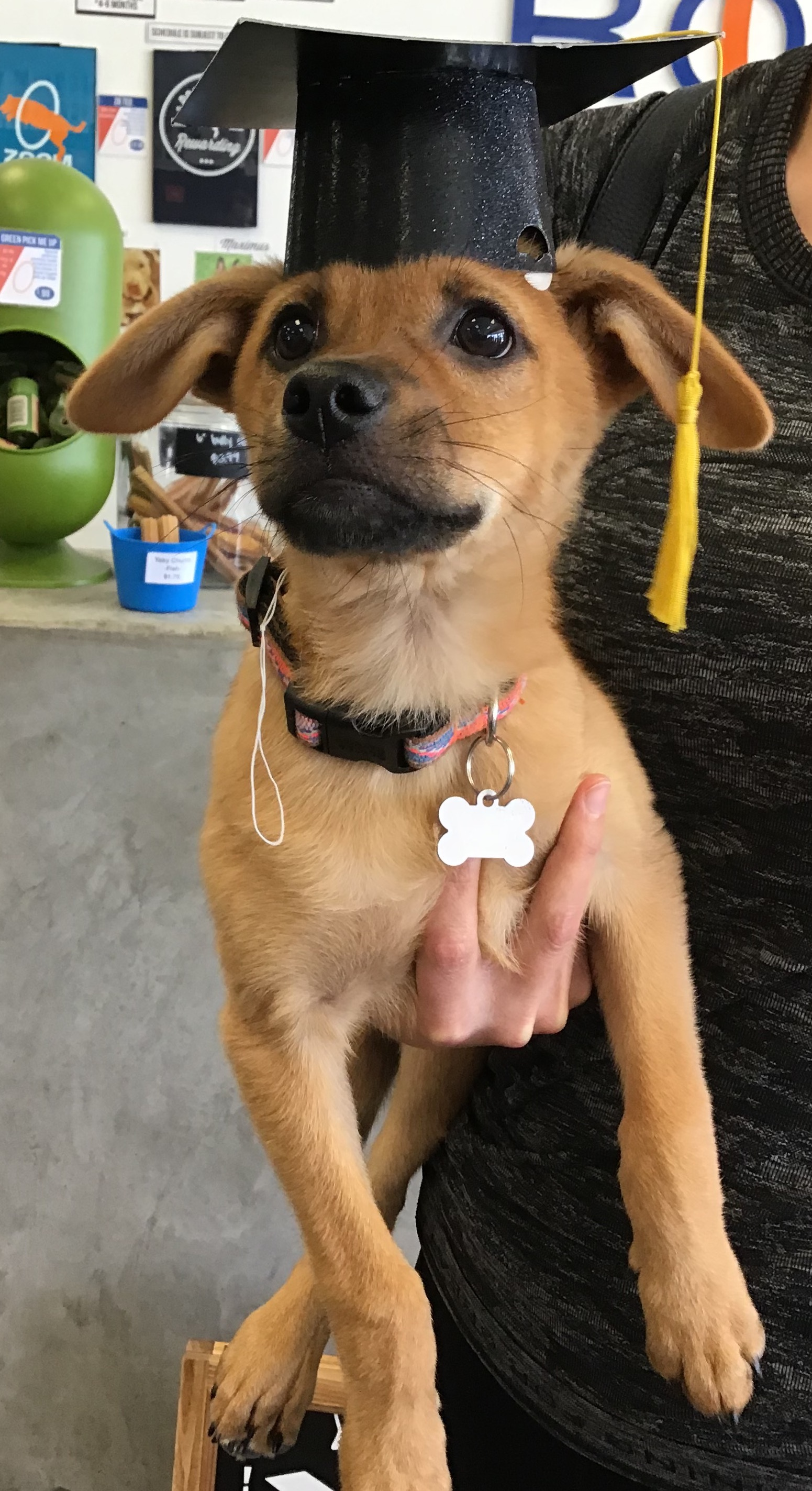 Dog Training Redondo Beach   Agility   Obedience   Puppy ...
