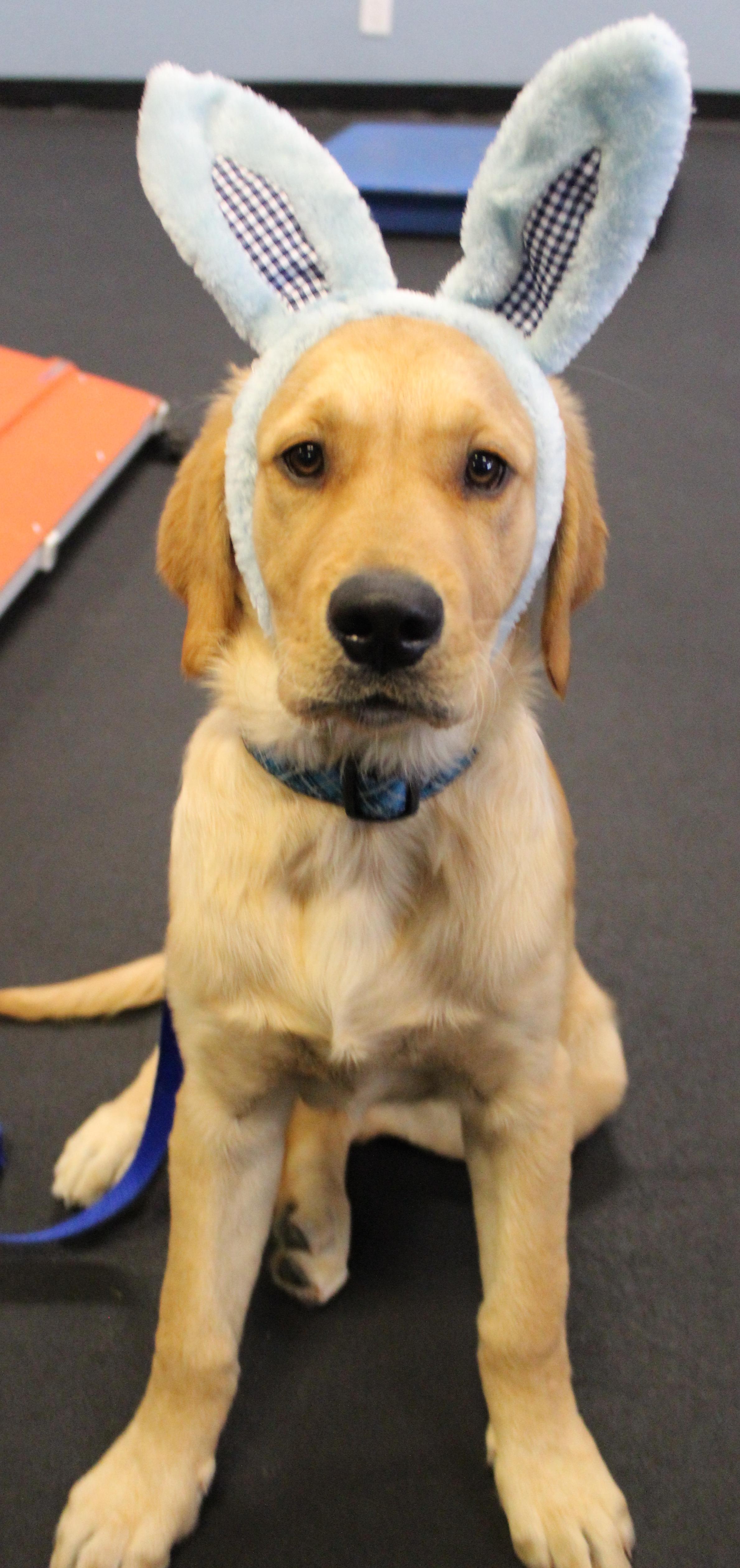Dog Training Huntington Beach