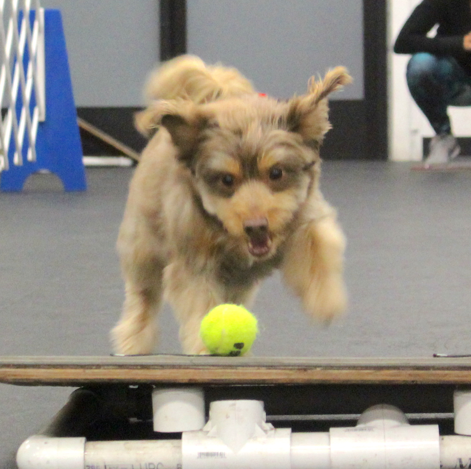Indiana Zoom Room Dog Training